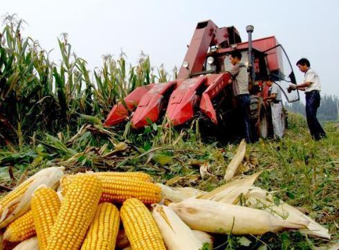 今年黑龙江粮补多少钱 黑龙江2019年玉米大豆补贴政策
