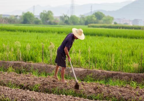 今年粮补啥时候下来 2019年国家粮补政策