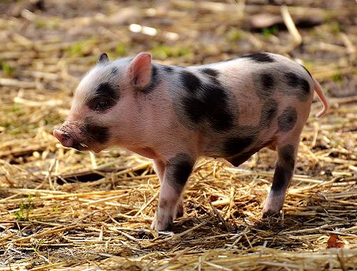 今日各省市猪价一览表_5月18日猪价最新消息