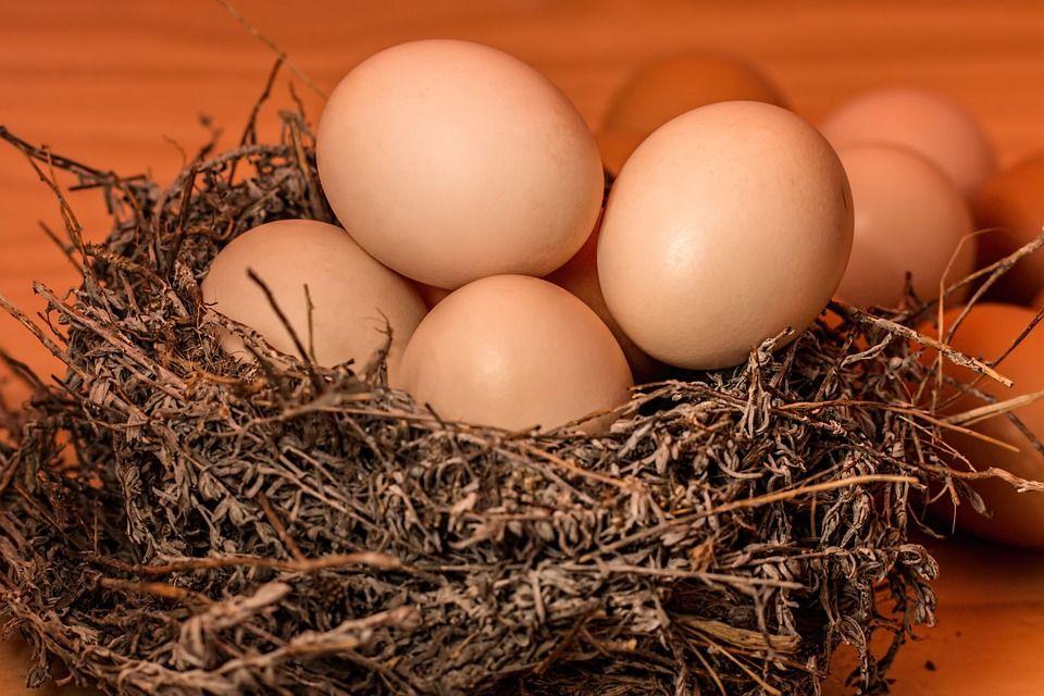 养殖户普遍步入盈利期 鸡蛋价格一个月飙涨逾六成